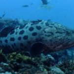 Scuba Diving Sodwana